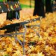 The Autumn Leaves (Les Feuilles Mortes) - Cecile Bredie